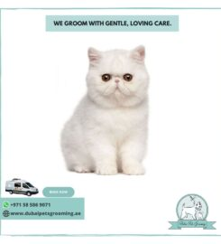 Pets Grooming Dubai